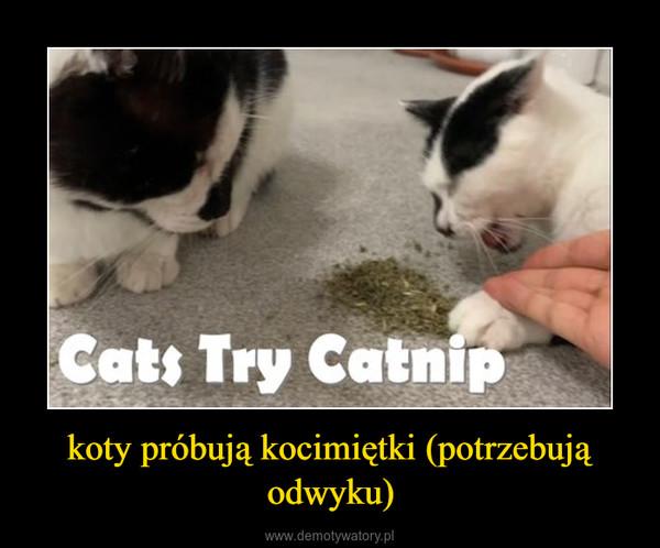 koty próbują kocimiętki (potrzebują odwyku) –