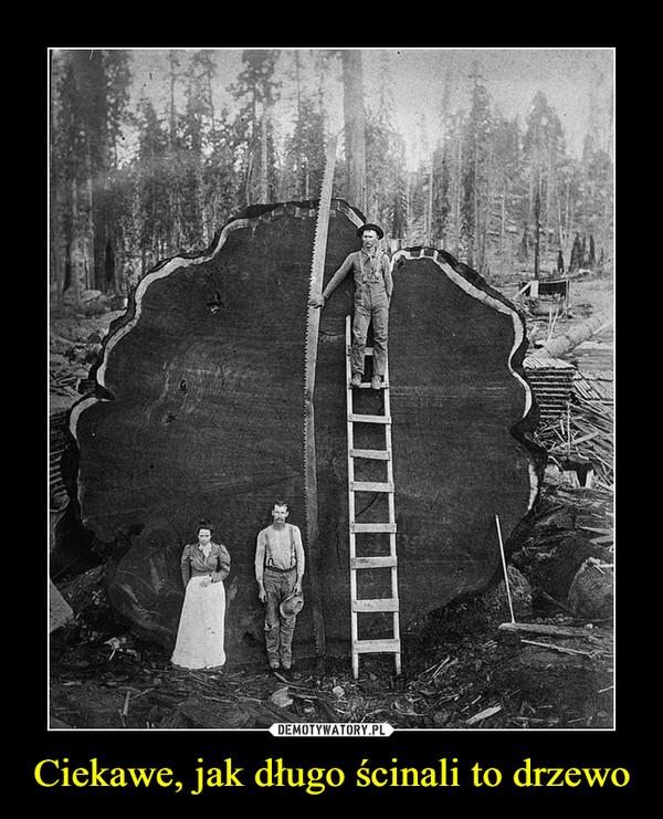Ciekawe, jak długo ścinali to drzewo –