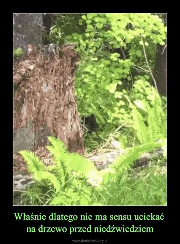 Właśnie dlatego nie ma sensu uciekać na drzewo przed niedźwiedziem –