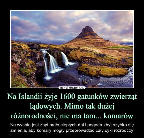 Na Islandii żyje 1600 gatunków zwierząt lądowych. Mimo tak dużej różnorodności, nie ma tam... komarów