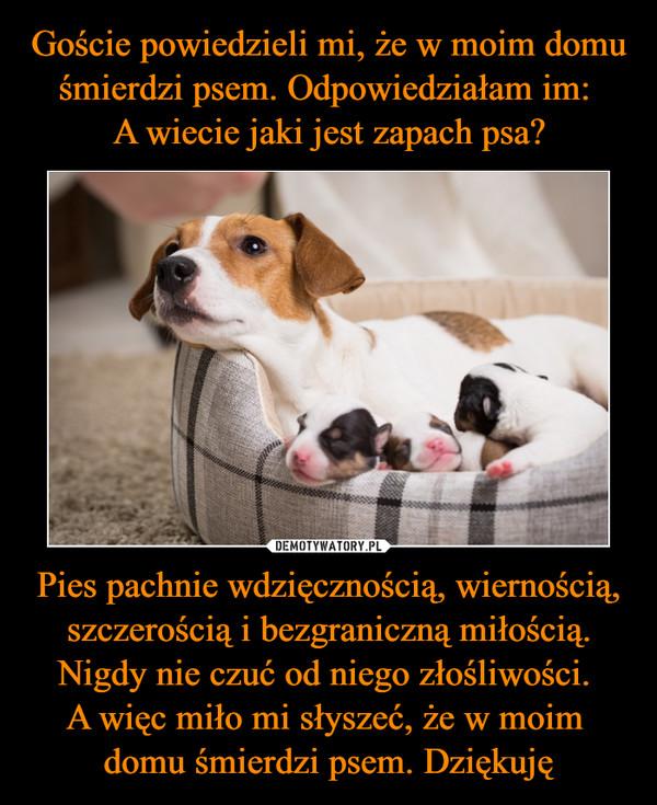 Pies pachnie wdzięcznością, wiernością, szczerością i bezgraniczną miłością. Nigdy nie czuć od niego złośliwości. A więc miło mi słyszeć, że w moim domu śmierdzi psem. Dziękuję –