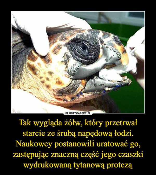 Tak wygląda żółw, który przetrwał starcie ze śrubą napędową łodzi. Naukowcy postanowili uratować go, zastępując znaczną część jego czaszki wydrukowaną tytanową protezą –