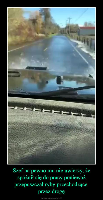 Szef na pewno mu nie uwierzy, że spóźnił się do pracy ponieważ przepuszczał ryby przechodzące przez drogę –
