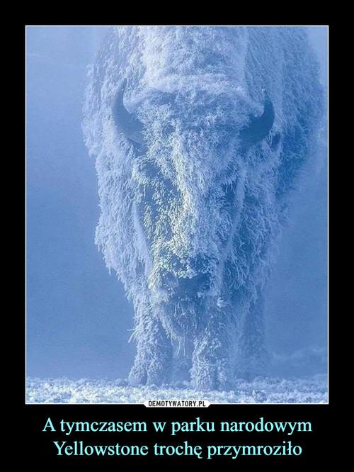 A tymczasem w parku narodowym Yellowstone trochę przymroziło
