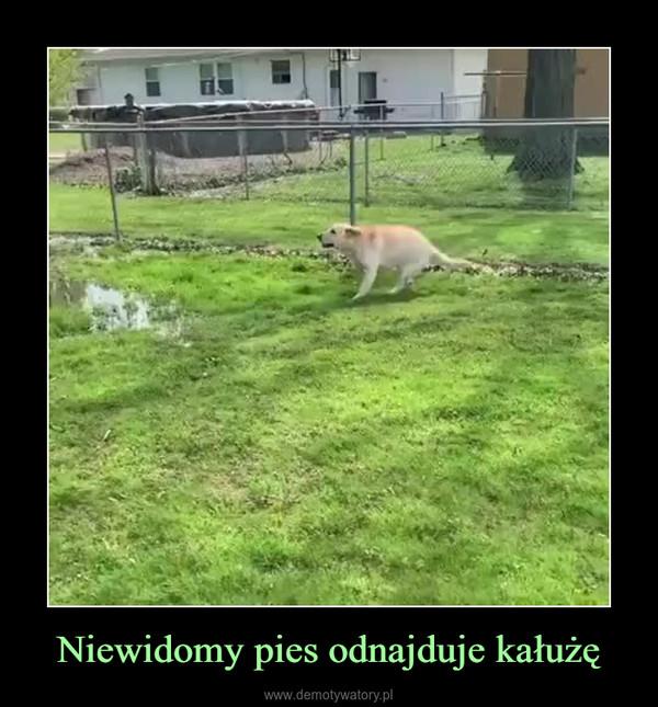 Niewidomy pies odnajduje kałużę –