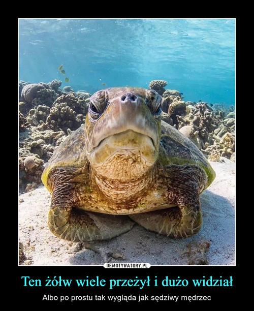 Ten żółw wiele przeżył i dużo widział