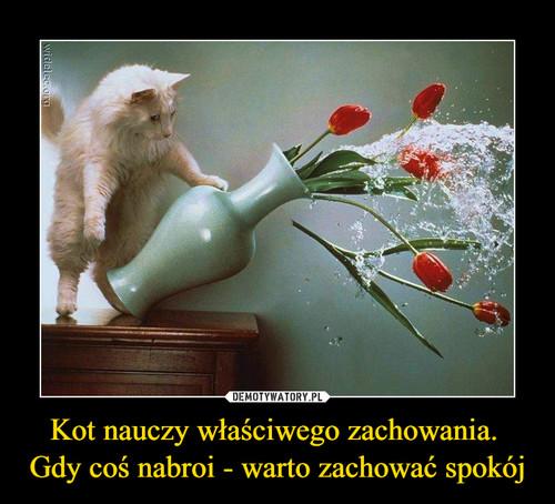 Kot nauczy właściwego zachowania.  Gdy coś nabroi - warto zachować spokój