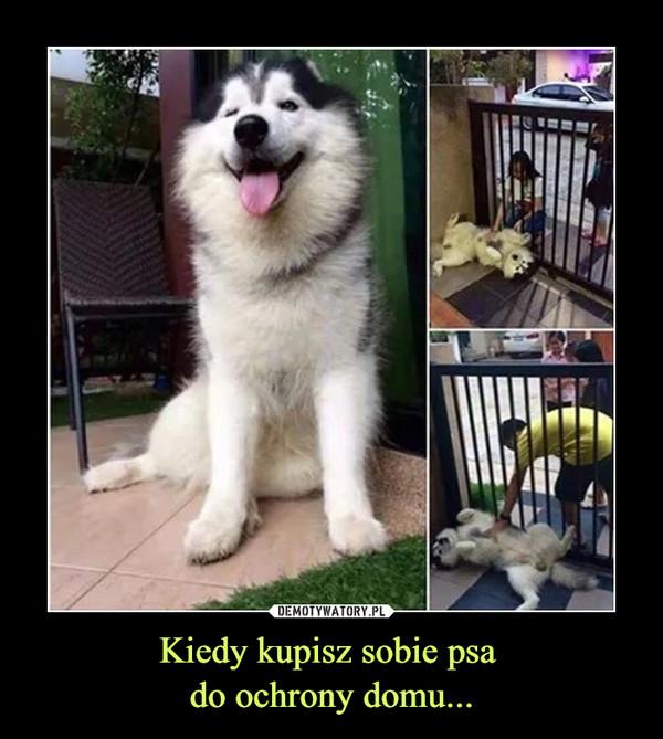 Kiedy kupisz sobie psa do ochrony domu... –