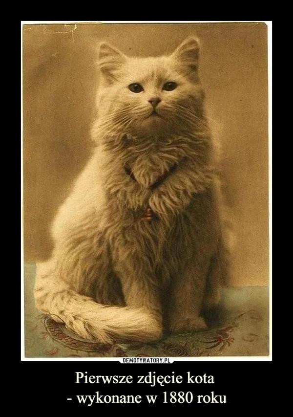 Pierwsze zdjęcie kota - wykonane w 1880 roku –