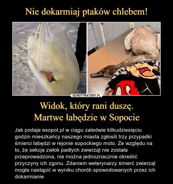 Widok, który rani duszę.Martwe łabędzie w Sopocie – Jak podaje esopot.pl w ciągu zaledwie kilkudziesięciu godzin mieszkańcy naszego miasta zgłosili trzy przypadki śmierci łabędzi w rejonie sopockiego molo. Ze względu na to, że sekcja zwłok padłych zwierząt nie została przeprowadzona, nie można jednoznacznie określić przyczyny ich zgonu. Zdaniem weterynarzy śmierć zwierząt mogła nastąpić w wyniku chorób spowodowanych przez ich dokarmianie