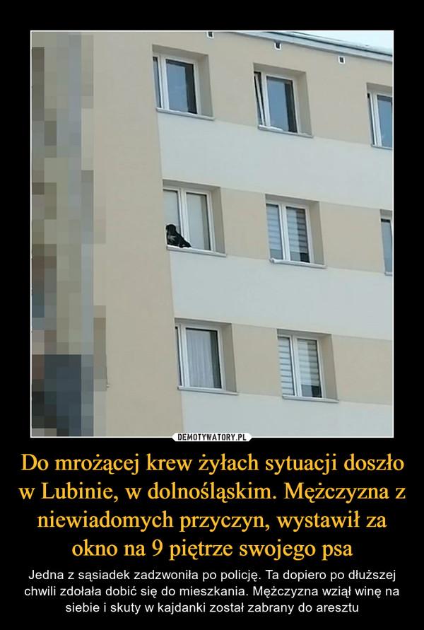 Do mrożącej krew żyłach sytuacji doszło w Lubinie, w dolnośląskim. Mężczyzna z niewiadomych przyczyn, wystawił za okno na 9 piętrze swojego psa – Jedna z sąsiadek zadzwoniła po policję. Ta dopiero po dłuższej chwili zdołała dobić się do mieszkania. Mężczyzna wziął winę na siebie i skuty w kajdanki został zabrany do aresztu