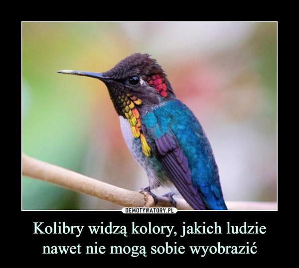 Kolibry widzą kolory, jakich ludzie nawet nie mogą sobie wyobrazić –