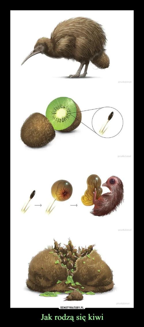 Jak rodzą się kiwi