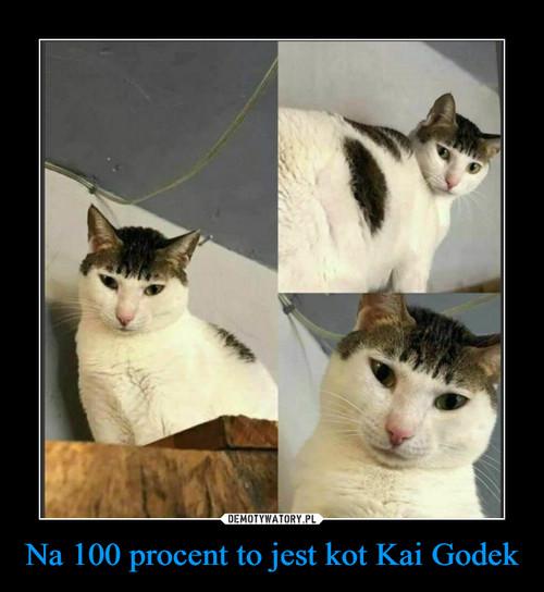 Na 100 procent to jest kot Kai Godek