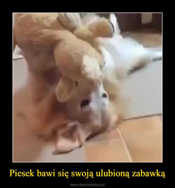 Piesek bawi się swoją ulubioną zabawką –