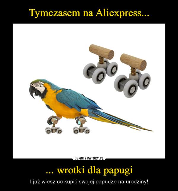 ... wrotki dla papugi – I już wiesz co kupić swojej papudze na urodziny!