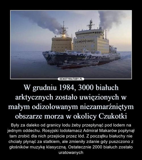 W grudniu 1984, 3000 białuch arktycznych zostało uwięzionych w małym odizolowanym niezamarźniętym obszarze morza w okolicy Czukotki
