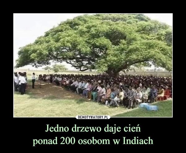 Jedno drzewo daje cieńponad 200 osobom w Indiach –