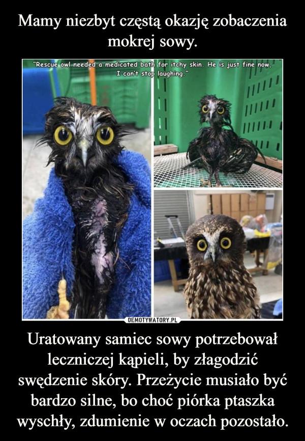 Uratowany samiec sowy potrzebował leczniczej kąpieli, by złagodzić swędzenie skóry. Przeżycie musiało być bardzo silne, bo choć piórka ptaszka wyschły, zdumienie w oczach pozostało. –