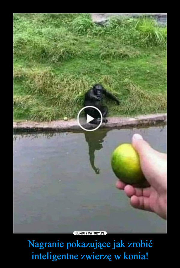 Nagranie pokazujące jak zrobić inteligentne zwierzę w konia! –