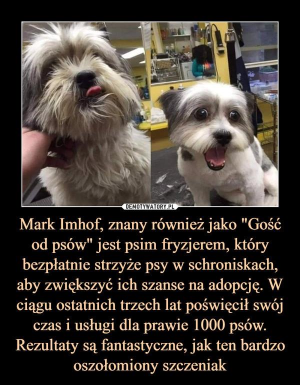 """Mark Imhof, znany również jako """"Gość od psów"""" jest psim fryzjerem, który bezpłatnie strzyże psy w schroniskach, aby zwiększyć ich szanse na adopcję. W ciągu ostatnich trzech lat poświęcił swój czas i usługi dla prawie 1000 psów. Rezultaty są fantastyczne, jak ten bardzo oszołomiony szczeniak –"""