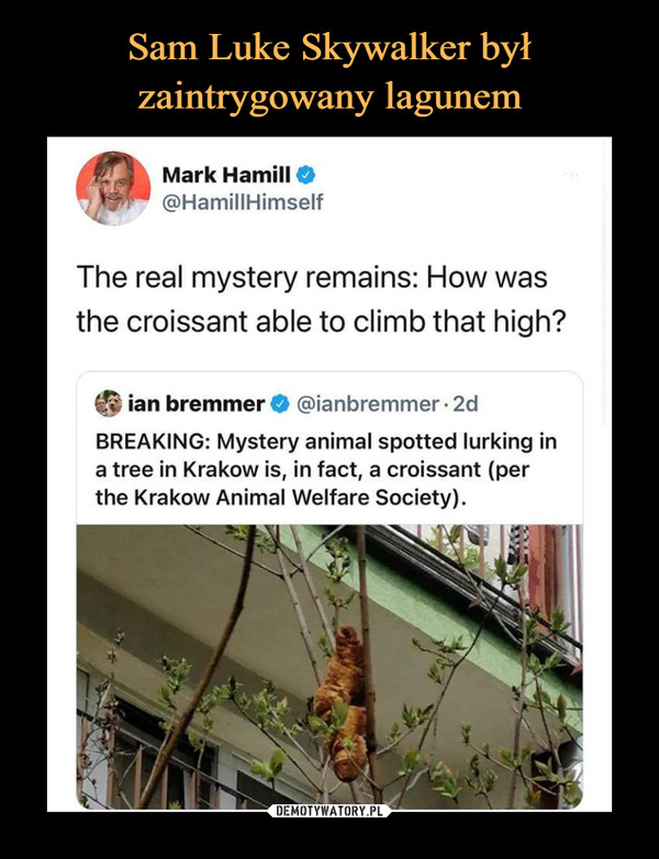 –  Mark Hamill O@HamillHimselfThe real mystery remains: How wasthe croissant able to climb that high?ian bremmer O @ianbremmer • 2dBREAKING: Mystery animal spotted lurking ina tree in Kraków is, in fact, a croissant (perthe Kraków Animal Welfare Society).