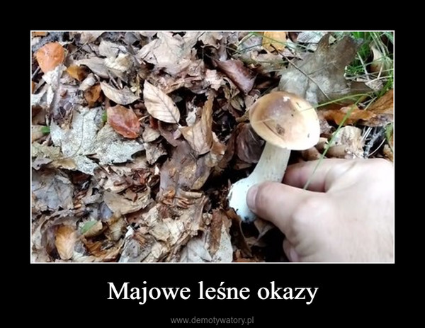 Majowe leśne okazy –