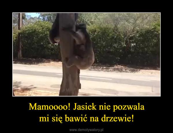 Mamoooo! Jasiek nie pozwalami się bawić na drzewie! –