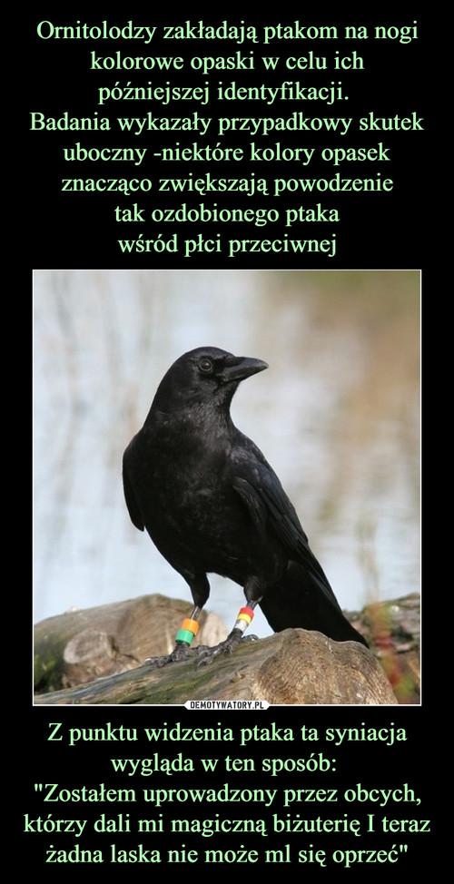 """Ornitolodzy zakładają ptakom na nogi kolorowe opaski w celu ich późniejszej identyfikacji.  Badania wykazały przypadkowy skutek uboczny -niektóre kolory opasek znacząco zwiększają powodzenie tak ozdobionego ptaka wśród płci przeciwnej Z punktu widzenia ptaka ta syniacja wygląda w ten sposób:  """"Zostałem uprowadzony przez obcych, którzy dali mi magiczną biżuterię I teraz żadna laska nie może ml się oprzeć"""""""