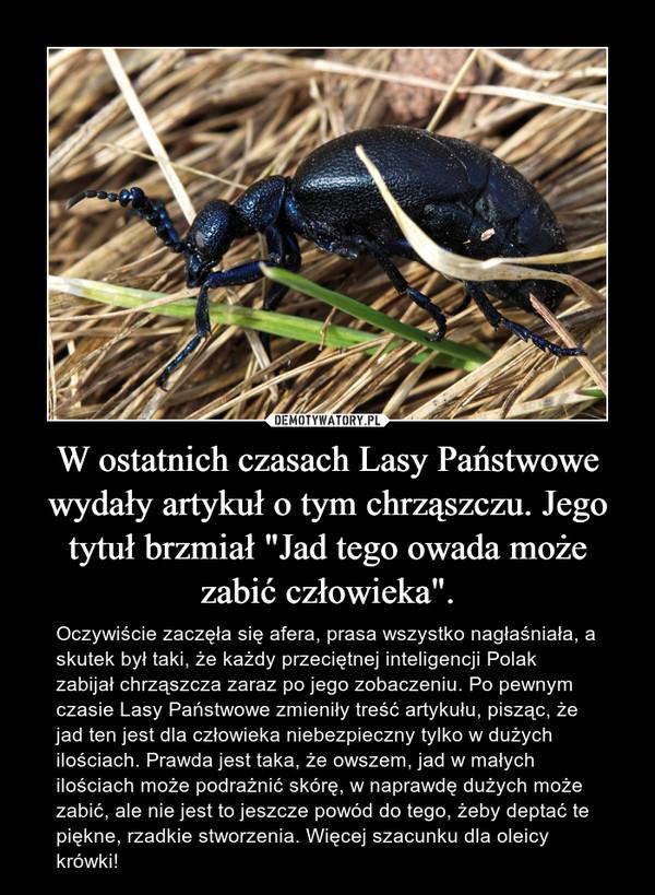 """W ostatnich czasach Lasy Państwowe wydały artykuł o tym chrząszczu. Jego tytuł brzmiał """"Jad tego owada może zabić człowieka"""". – Oczywiście zaczęła się afera, prasa wszystko nagłaśniała, a skutek był taki, że każdy przeciętnej inteligencji Polak zabijał chrząszcza zaraz po jego zobaczeniu. Po pewnym czasie Lasy Państwowe zmieniły treść artykułu, pisząc, że jad ten jest dla człowieka niebezpieczny tylko w dużych ilościach. Prawda jest taka, że owszem, jad w małych ilościach może podrażnić skórę, w naprawdę dużych może zabić, ale nie jest to jeszcze powód do tego, żeby deptać te piękne, rzadkie stworzenia. Więcej szacunku dla oleicy krówki!"""