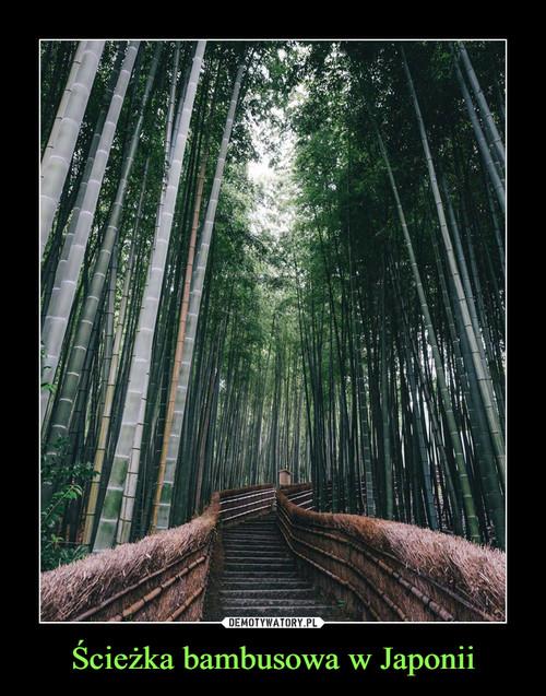 Ścieżka bambusowa w Japonii