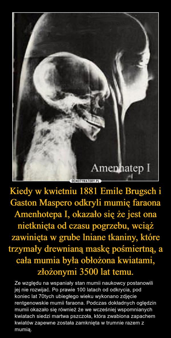 Kiedy w kwietniu 1881 Emile Brugsch i Gaston Maspero odkryli mumię faraona Amenhotepa I, okazało się że jest ona nietknięta od czasu pogrzebu, wciąż zawinięta w grube lniane tkaniny, które trzymały drewnianą maskę pośmiertną, a cała mumia była obłożona kwiatami, złożonymi 3500 lat temu. – Ze względu na wspaniały stan mumii naukowcy postanowili jej nie rozwijać. Po prawie 100 latach od odkrycia, pod koniec lat 70tych ubiegłego wieku wykonano zdjęcie rentgenowskie mumii faraona. Podczas dokładnych oględzin mumii okazało się również że we wcześniej wspomnianych kwiatach siedzi martwa pszczoła, która zwabiona zapachem kwiatów zapewne została zamknięta w trumnie razem z mumią.