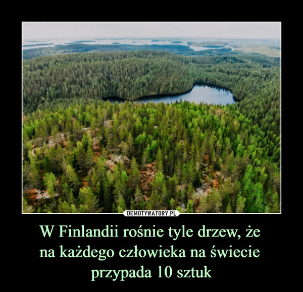 W Finlandii rośnie tyle drzew, że na każdego człowieka na świecie przypada 10 sztuk –