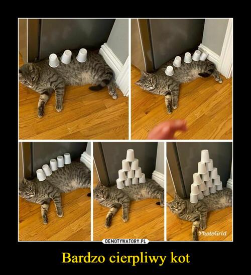 Bardzo cierpliwy kot