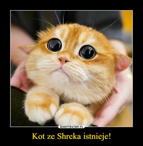 Kot ze Shreka istnieje! –