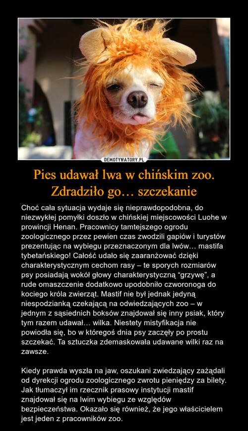 Pies udawał lwa w chińskim zoo. Zdradziło go… szczekanie