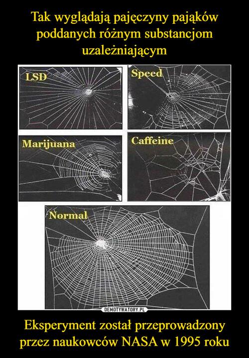 Tak wyglądają pajęczyny pająków poddanych różnym substancjom uzależniającym Eksperyment został przeprowadzony przez naukowców NASA w 1995 roku