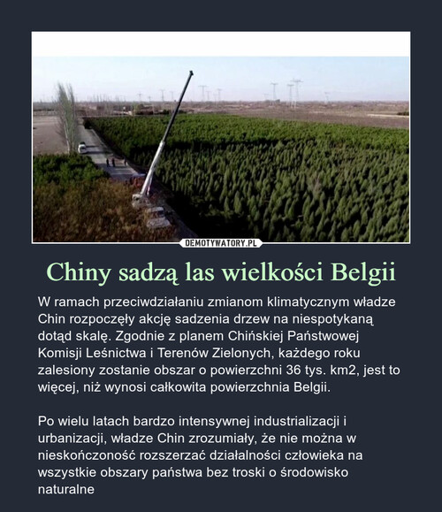 Chiny sadzą las wielkości Belgii