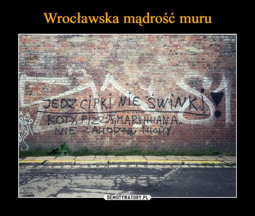 Wrocławska mądrość muru