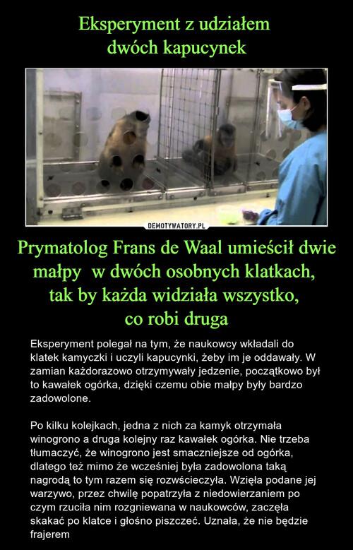 Eksperyment z udziałem  dwóch kapucynek Prymatolog Frans de Waal umieścił dwie małpy  w dwóch osobnych klatkach,  tak by każda widziała wszystko,  co robi druga
