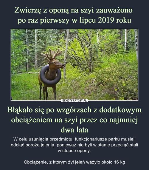 Zwierzę z oponą na szyi zauważono  po raz pierwszy w lipcu 2019 roku Błąkało się po wzgórzach z dodatkowym obciążeniem na szyi przez co najmniej dwa lata